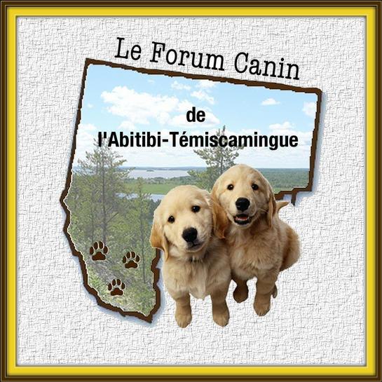 Forum canin de l'Abitibi