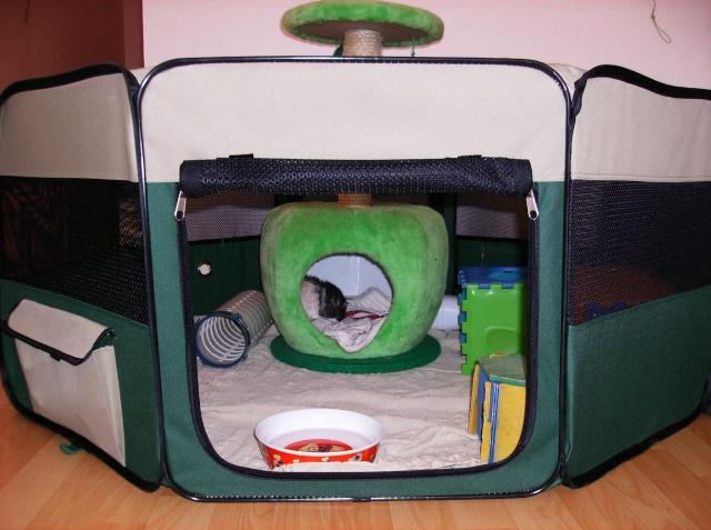 le parc chiot pour rat. Black Bedroom Furniture Sets. Home Design Ideas