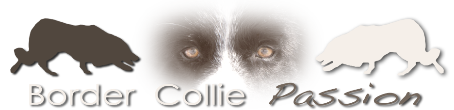 Border Collie Forum