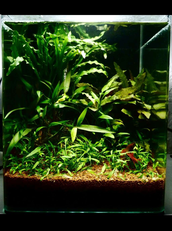 Aquarium Naturel Plant 233 Un Peu D Asie