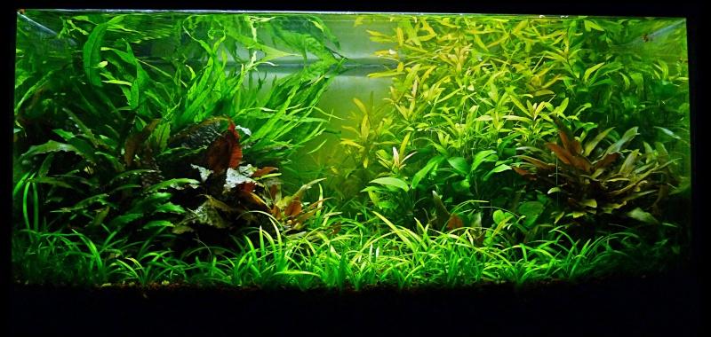 aquarium naturel plant. Black Bedroom Furniture Sets. Home Design Ideas