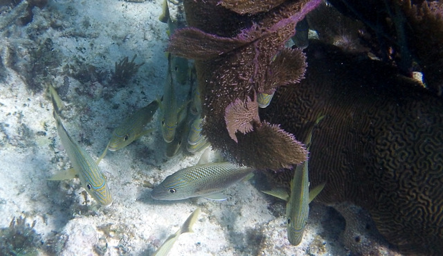 balade catamaran floride key largo quicksilver reef roamer snorkeling