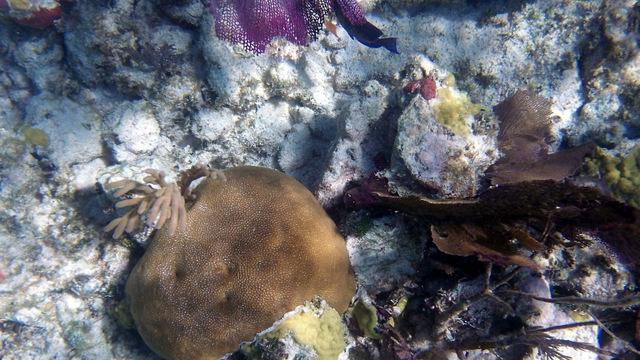 balade catamaran floride key largo  snorkelingquicksilver reef roamer