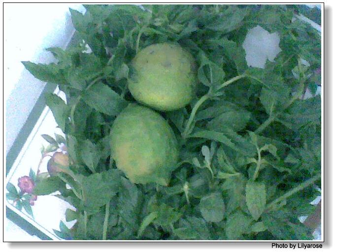 عصير النعناع بالليمون photo023.jpg
