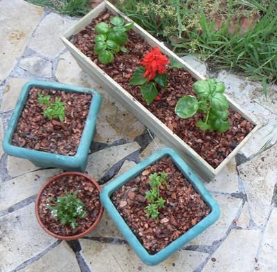 Formidable Tomates Cerises En Jardiniere #5: Pot_110.jpg