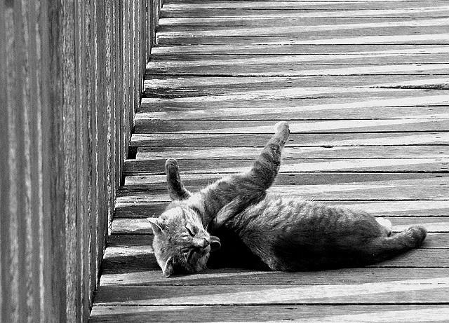 du pont chat Rendu au milieu du pont, «pouf» le chat disparu mystérieusement dans une explosion, laissant qu'un tas de poils fumant sur la place depuis ce jour,.