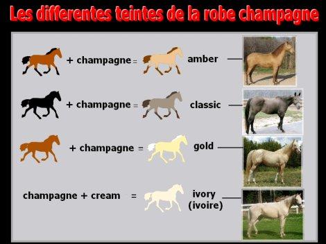 Toutes les couleurs de robes des chevaux