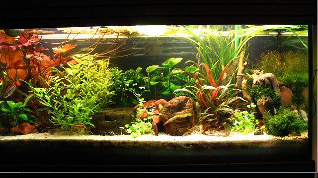 déco terrasse aquarium