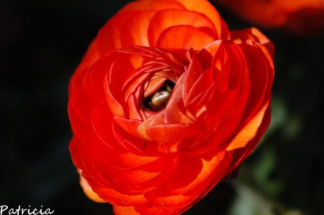 milles pardons dans fleurs 00610