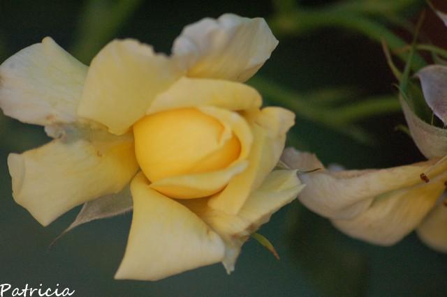 01510 dans fleurs