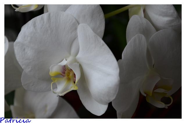 1610 dans fleurs