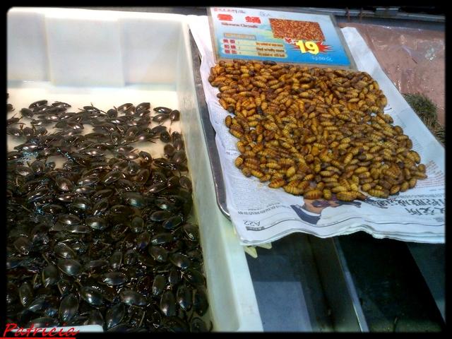 59311 dans insectes
