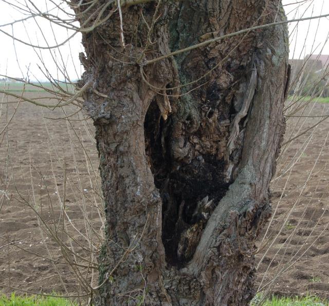 l'arbre mort... dans Mes coups de coeur... arbre11