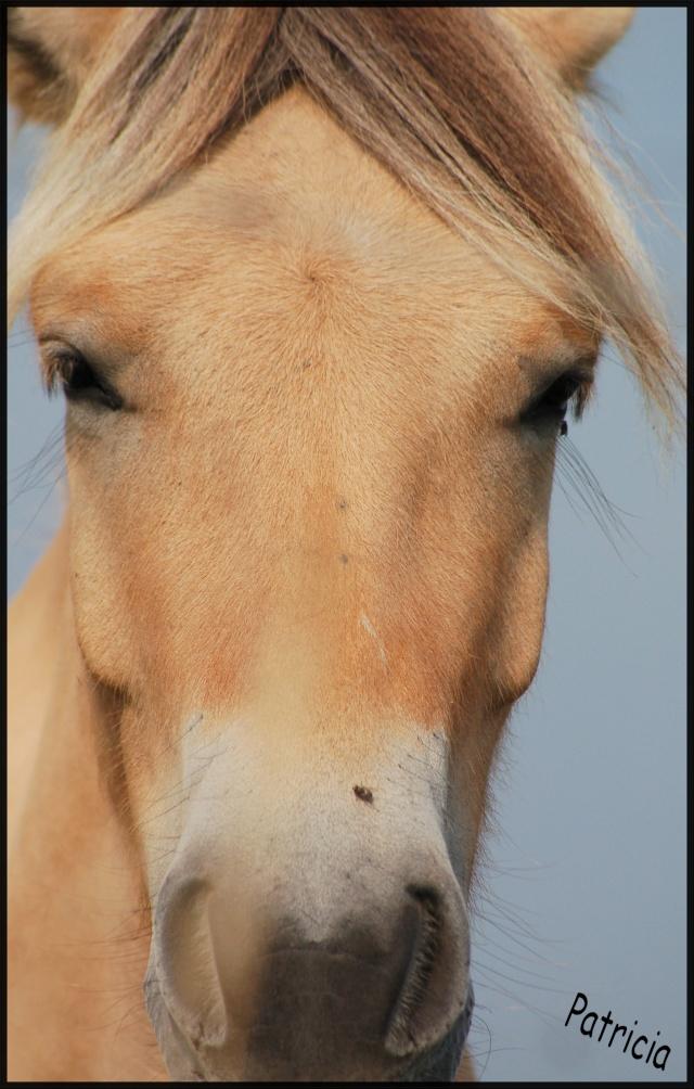 belle bête ! dans Mes coups de coeur... cheval11
