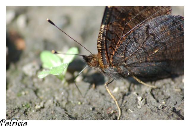 papillon dans nature dsc_0025