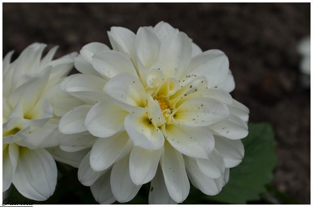 dsc_0028 dans fleurs
