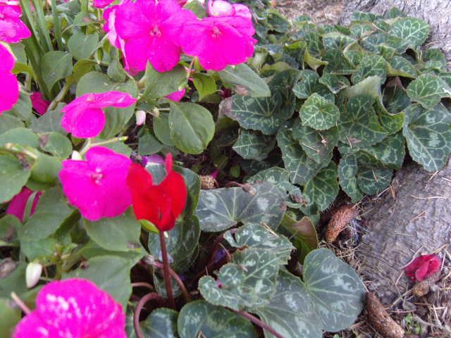 Jardini res d 39 automne for Jardiniere d automne