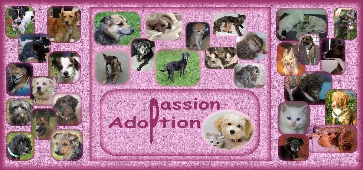 Adoption-Passion.