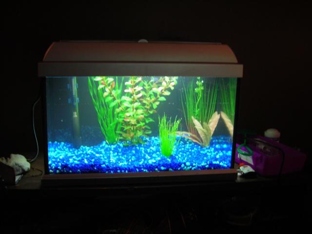 afficher le sujet expert aquarium eau douce reptilic. Black Bedroom Furniture Sets. Home Design Ideas