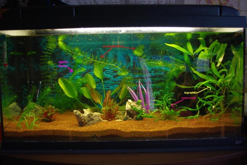 Vend plantes d 39 aquarium 95 et alentours for Vend aquarium