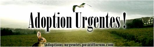 Adoptions Urgentes !