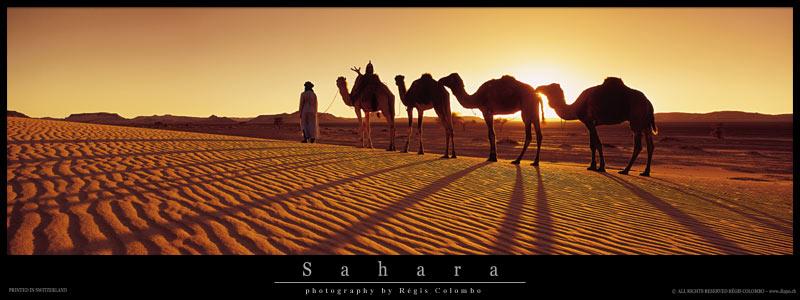 Taiba votre symbole du sahara