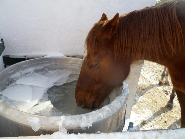 Le sol est gel que faire de mon cheval - Resistance pour chauffer l eau ...