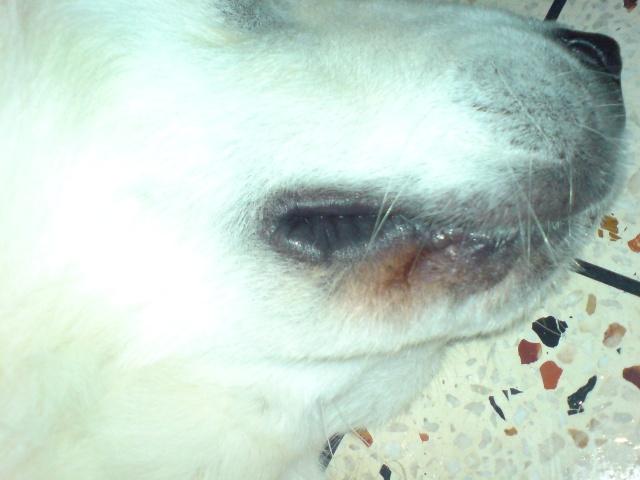 Santé chien : Rouge entre les pattes