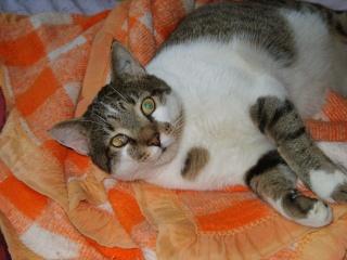 nos chats l 39 adoption asso patte normande normandie forum sur les chats. Black Bedroom Furniture Sets. Home Design Ideas