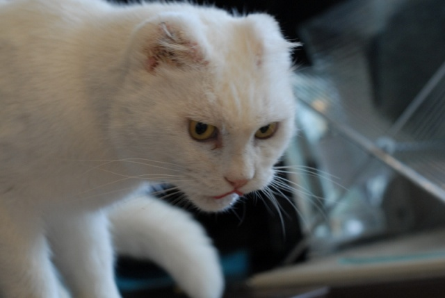 chat homme d affaire strasbourg
