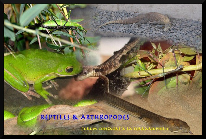 reptiles & arthropodes
