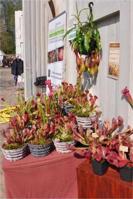 F te des plantes st jean de beauregard 91 printemps 2012 - Fete des plantes saint jean de beauregard ...