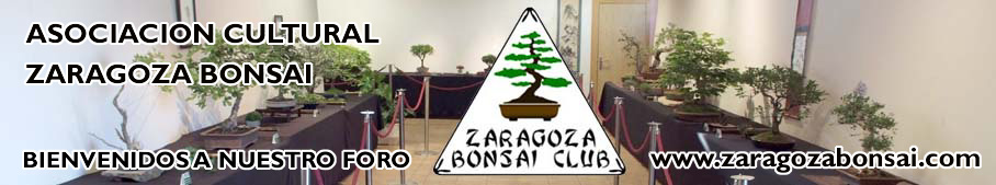 ZARAGOZA BONSAI
