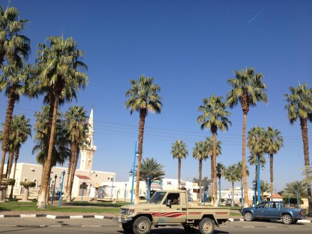 شجرة الزيتون في شوارع طبرجل img_2512.jpg