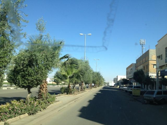 شجرة الزيتون في شوارع طبرجل img_2615.jpg