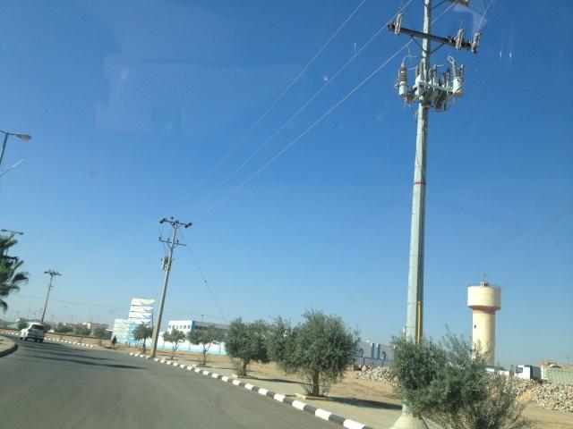 شجرة الزيتون في شوارع طبرجل img_2620.jpg