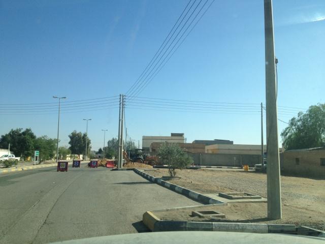 شجرة الزيتون في شوارع طبرجل img_2621.jpg