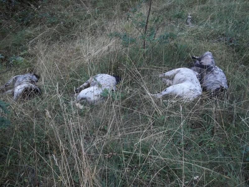 photo comment chasser en espagne