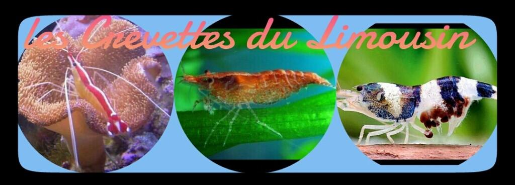Crevettes du Limousin