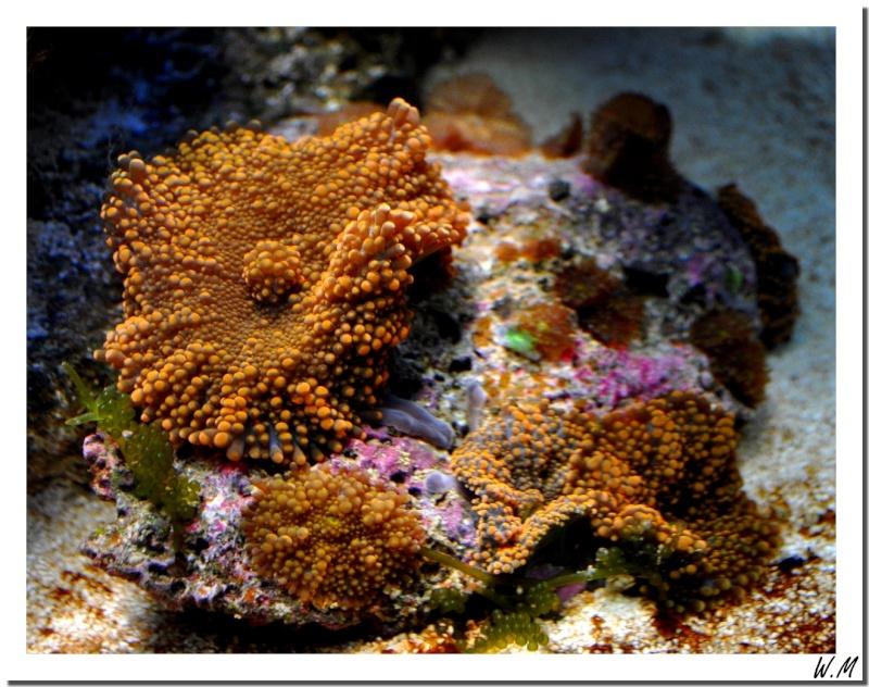 Des nouveaux coraux...
