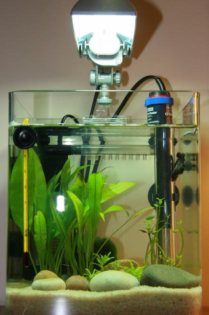 aquarium 10 litre trouvez le meilleur prix sur voir. Black Bedroom Furniture Sets. Home Design Ideas