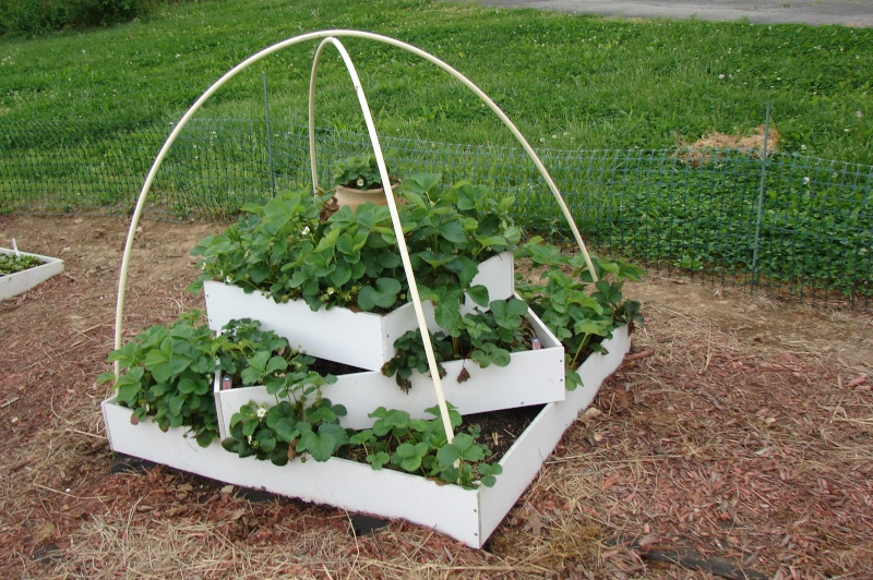 Strawberry pyramid opinions help for Strawberry garden designs