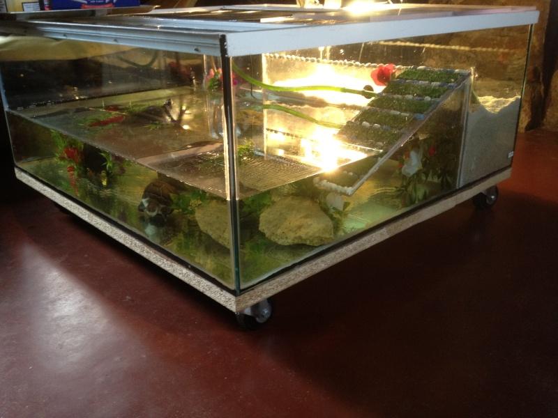 Aquarium pas cher pour tortue stunning quelles sont les varits de tortues dueau with aquarium - Aquarium complet pour tortue d eau ...