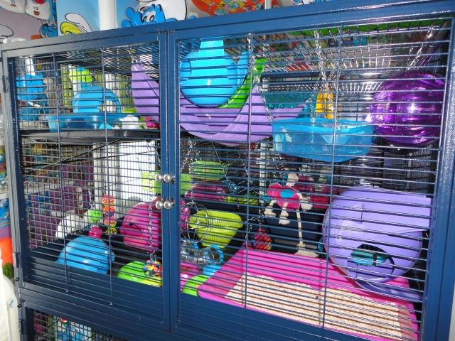Ides de jeux pour rats - Raterie Les Voleurs de Miettes