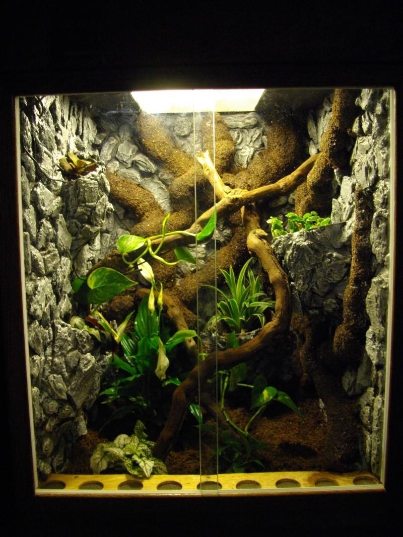 forum l pidophasmes tuto d coration pour terrarium tropical. Black Bedroom Furniture Sets. Home Design Ideas