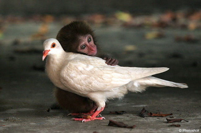لمحبى الحيوانات