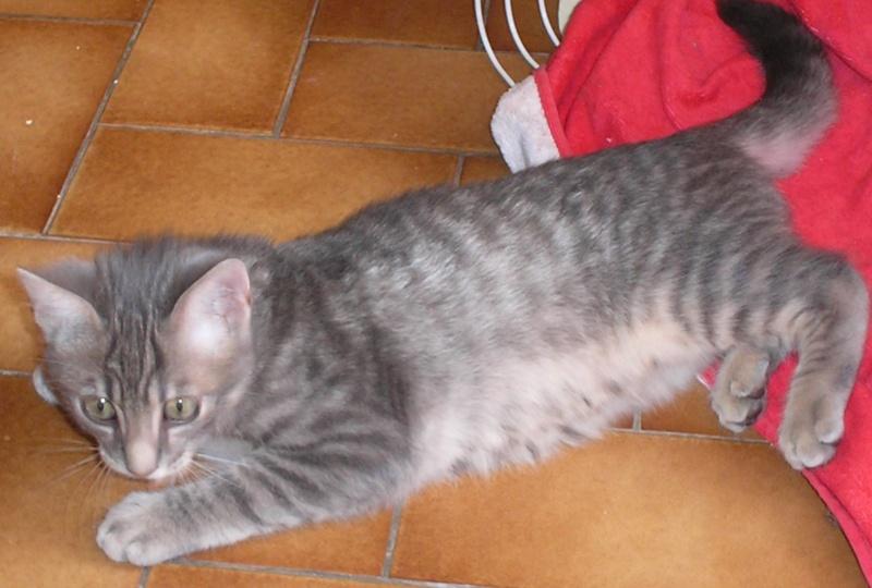 Dewey un chaton trop mignon page 2 - Couper les griffes d un chaton de 2 mois ...