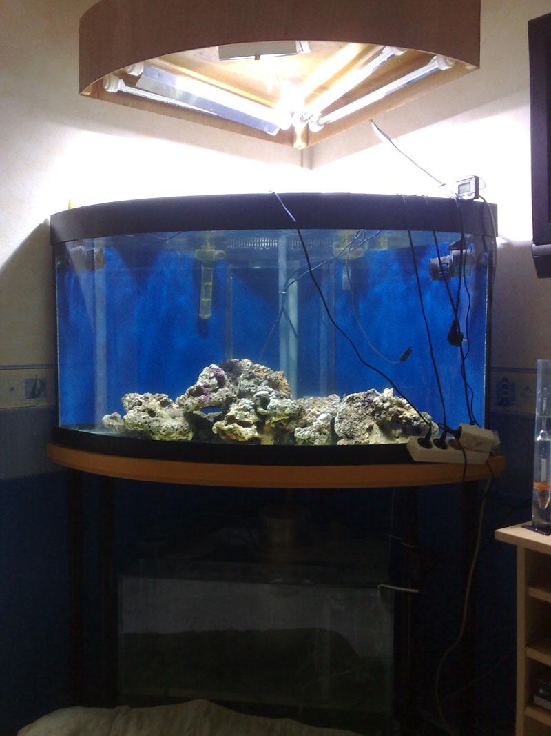 ehrf rchtige aquarium eau de mer complet id es de conception de table basse. Black Bedroom Furniture Sets. Home Design Ideas