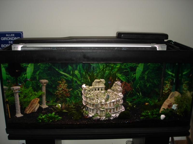 mon aquarium 240 litres. Black Bedroom Furniture Sets. Home Design Ideas