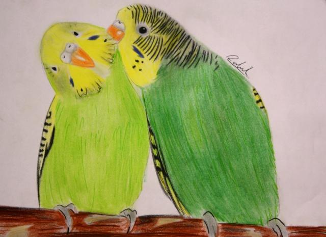 Les perruches dans l 39 art - Dessin perruche ...
